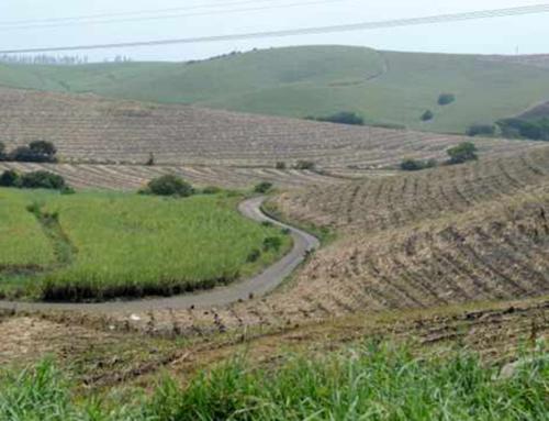 Sugar Industry Hails Signing of Master Plan